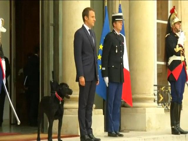 'Đệ nhất khuyển' nước Pháp tè bậy trong điện Elysee