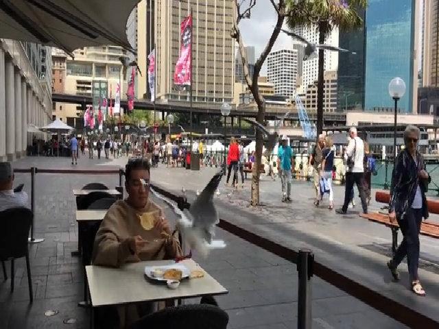 Đàm Vĩnh Hưng mắng chim vì bị cướp thức ăn