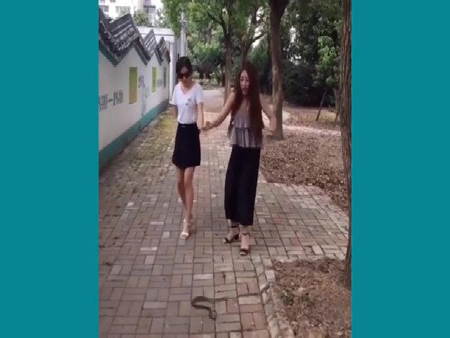 Hai người đẹp hốt hoảng khi bị rắn chặn đường