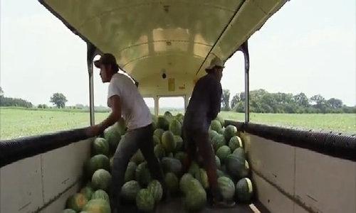 Gia đình 5 thế hệ trồng dưa hấu tại Mỹ