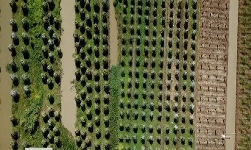 Nông dân thắp đèn cho thanh long ra trái 12 vụ mỗi năm