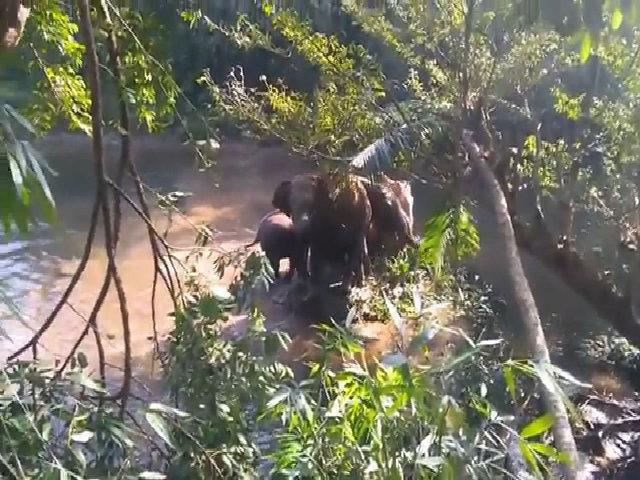 Voi mẹ giương vòi 'cảm ơn' đội cứu hộ giải cứu voi con