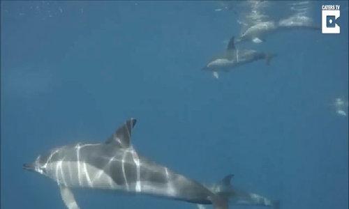 Khúc ca dưới lòng đại dương của loài cá heo nhút nhát