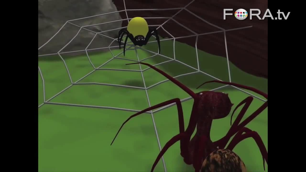 Loài nhện giống bồ nông chuyên ăn thịt đồng loại
