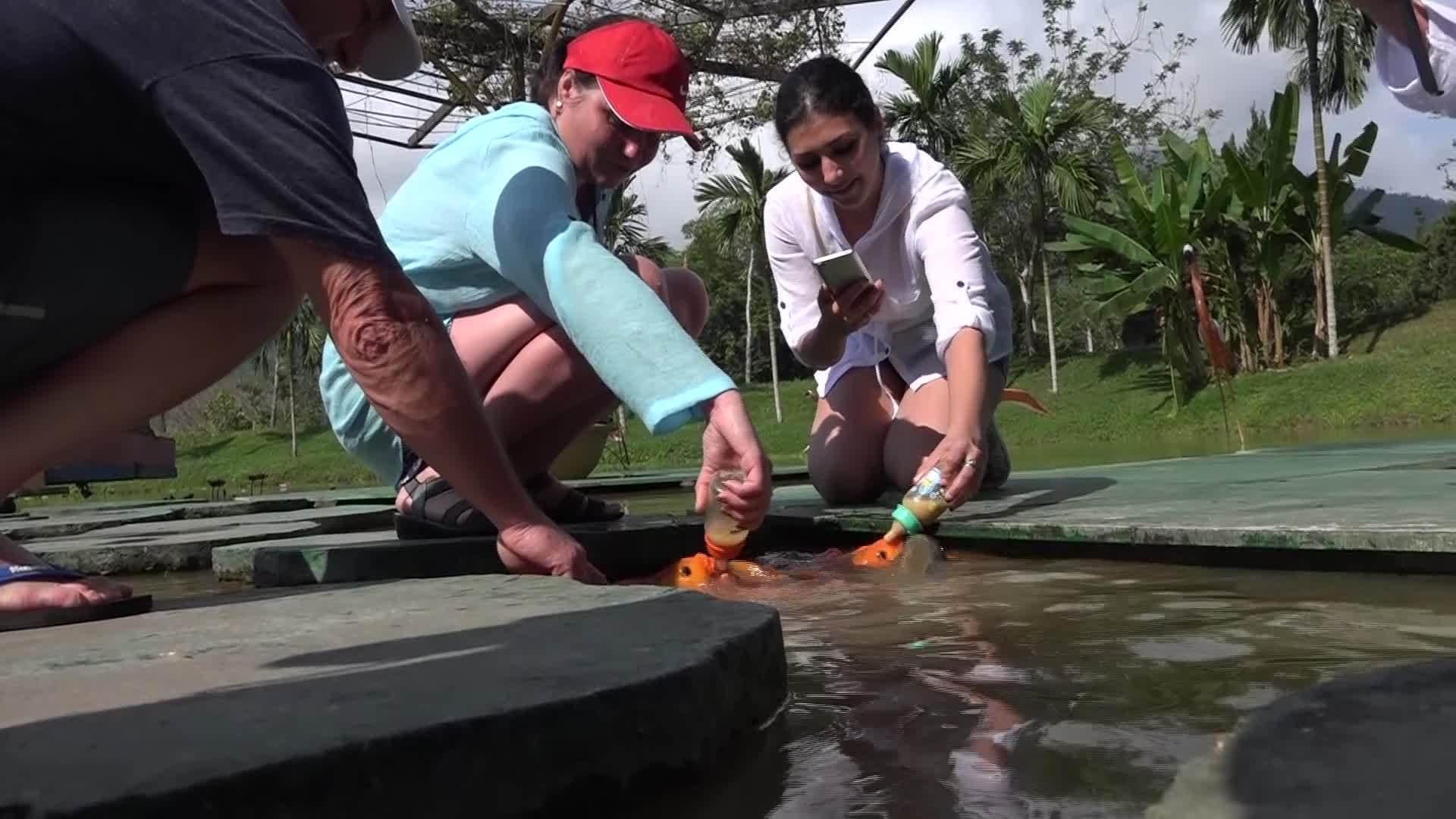 Hơn 1.000 con cá chép được ăn bằng bú bình ở Khánh Hòa