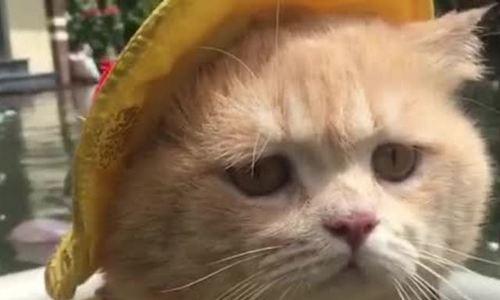 Chú mèo bán cá tên Chó ngộ nghĩnh, dễ thương ở Hải Phòng