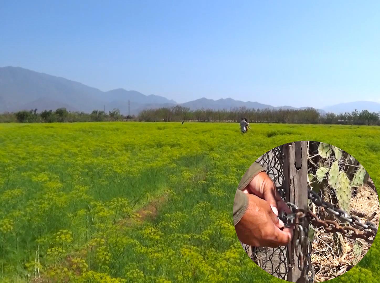 Chủ vườn Thì Là 4ha khóa cổng vì khách tham quan dẫm đạp hoa