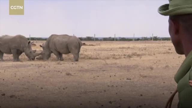 Tê giác trắng phương bắc đực cuối cùng trên thế giới qua đời
