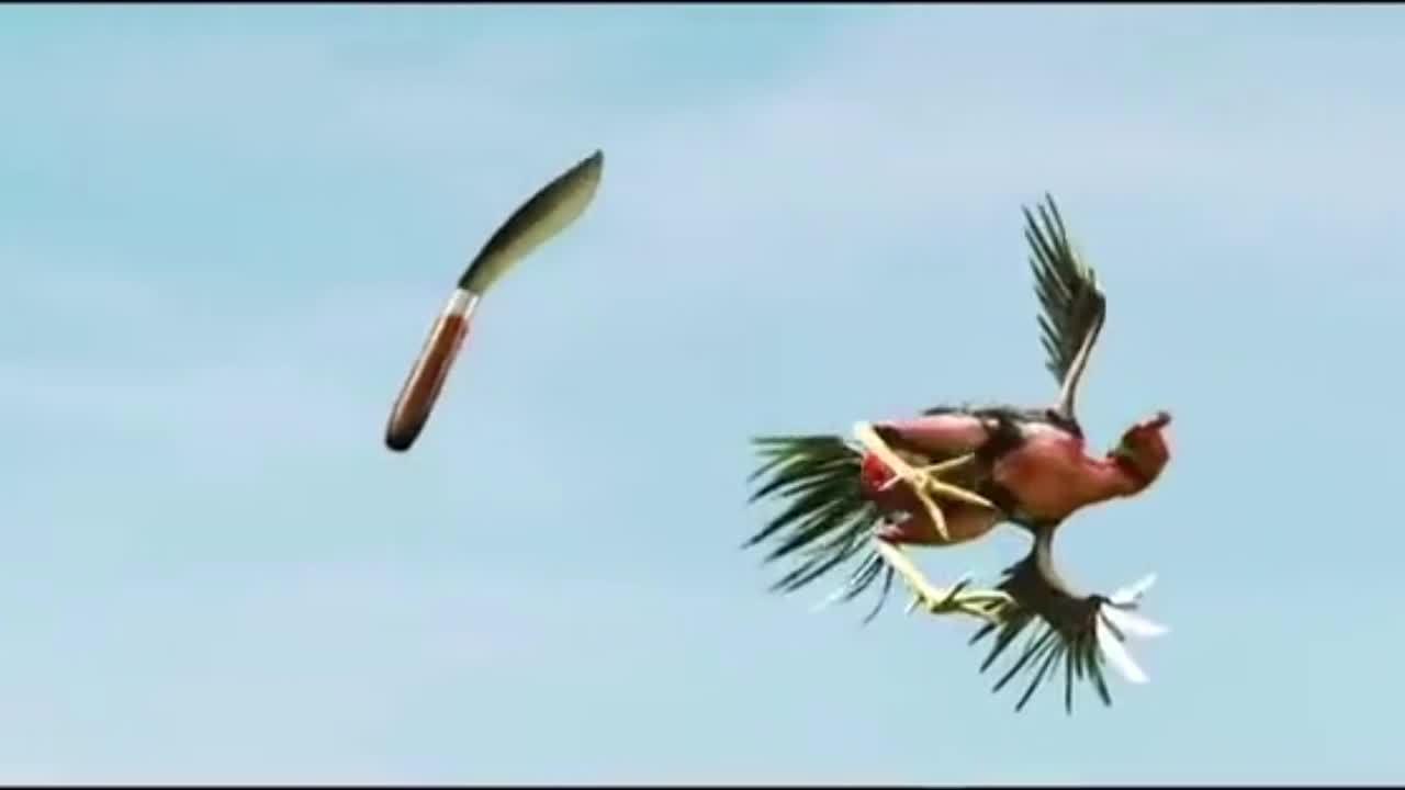 'Thần kê' thể hiện võ công cao cường khiến nhiều người tròn mắt