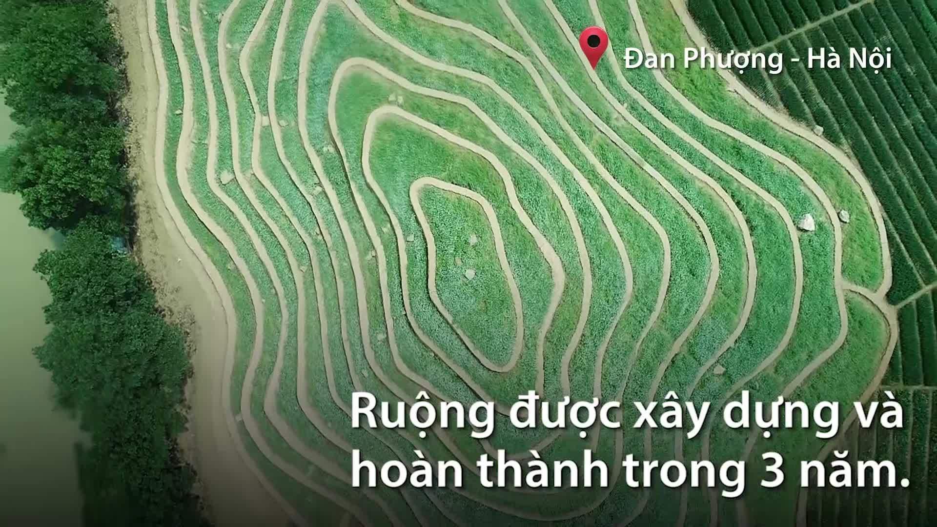 Ruộng hoa bậc thang 40.000 m2 ở Hà Nội