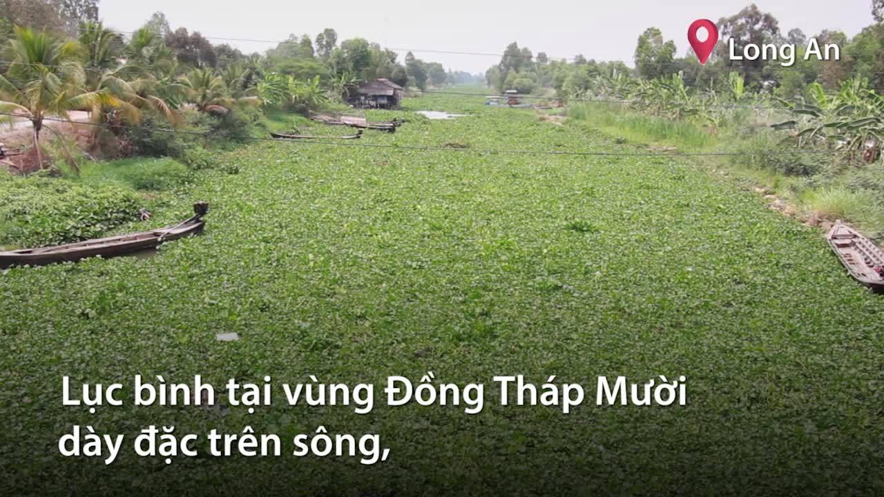 Người dân phun thuốc, cắt diệt lục bình dày đặt trên sông