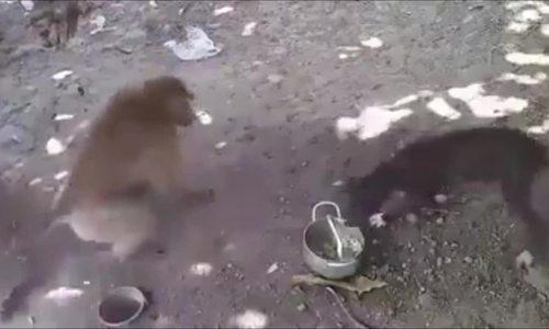 Chó nổi giận vì liên tục bị khỉ trêu chọc