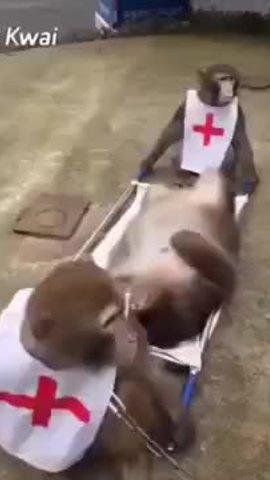 Nạn nhân sững sờ vì bị nhân viên cấp cứu bỏ rơi