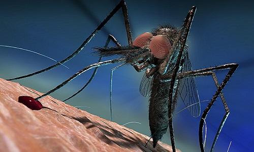 Cách muỗi qua mặt hệ miễn dịch khi hút máu người
