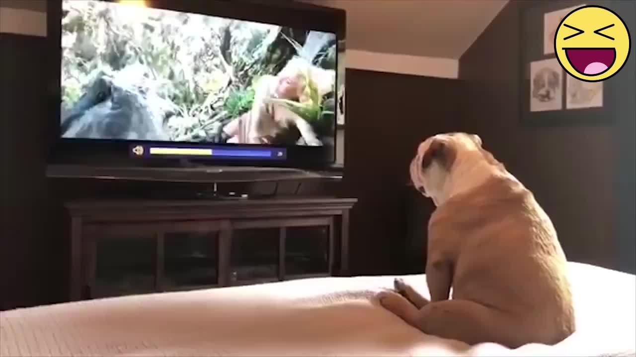 Biểu cảm của cún cưng khi xem phim