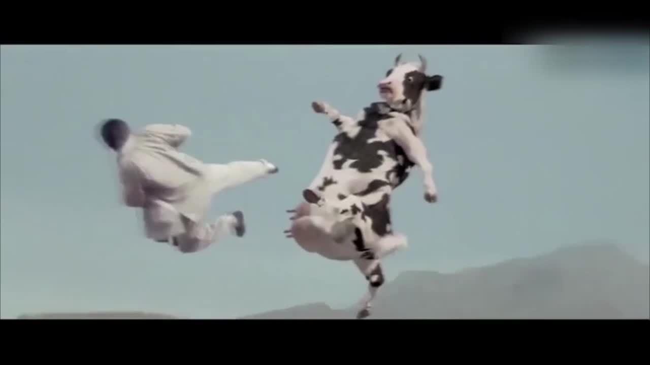 Trận đánh 'kinh điển' giữa người và bò sữa