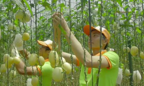 Những loại trái cây ngon lạ của nông dân Việt
