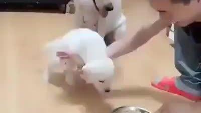 Chó mẹ ra tay cản chủ để chó con được ăn