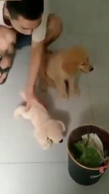 Chó kinh hãi trước màn dạy dỗ của cậu chủ