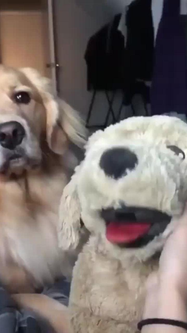 Chó nhồi bông chịu đòn ghen vì được cô chủ vuốt ve