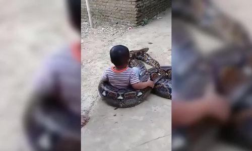 Bé trai chơi đùa với trăn ở Indonesia