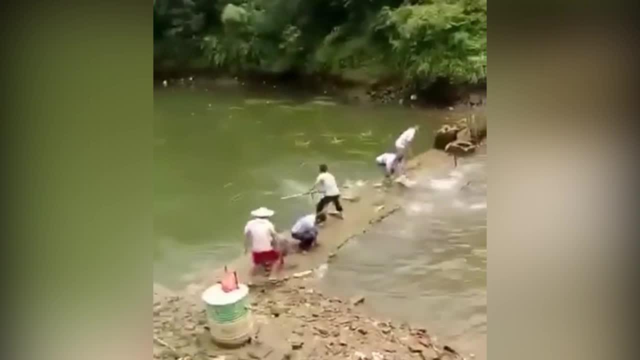 Nhiều người phấn khởi khi cá nhảy lên bờ
