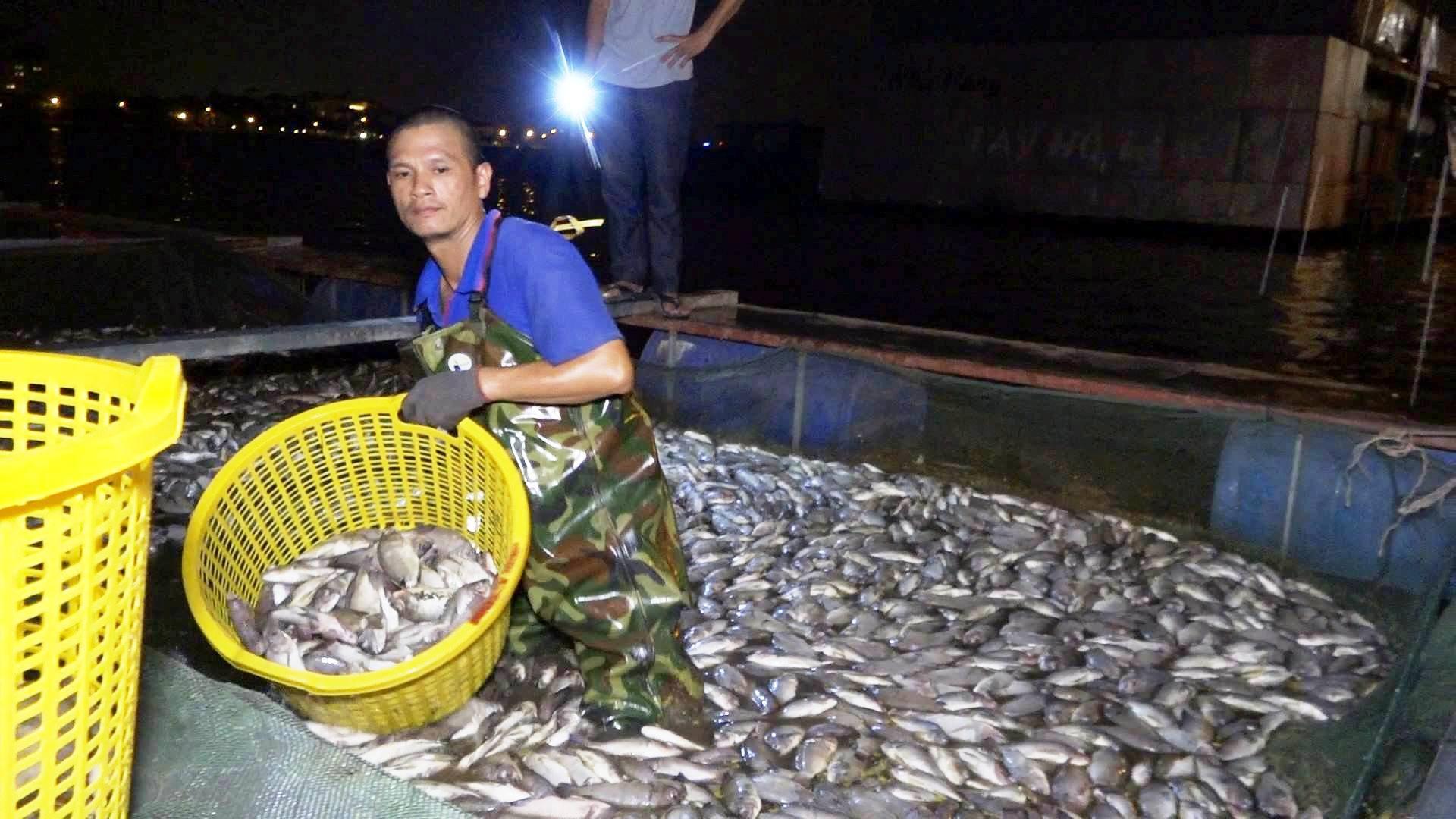 Trắng đêm thu gom hàng trăm bì cá chết Hồ Tây