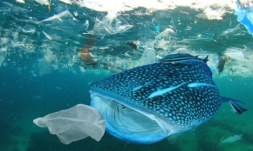 Điều gì xảy ra khi đại dương trong suốt?