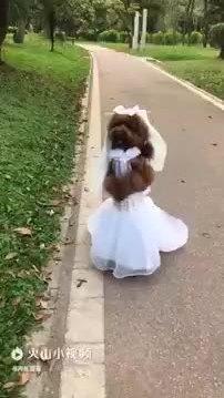 Cún cưng hóa thân thành cô dâu xinh xắn