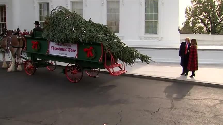 Vợ chồng Trump nhận cây thông Giáng sinh Nhà Trắng