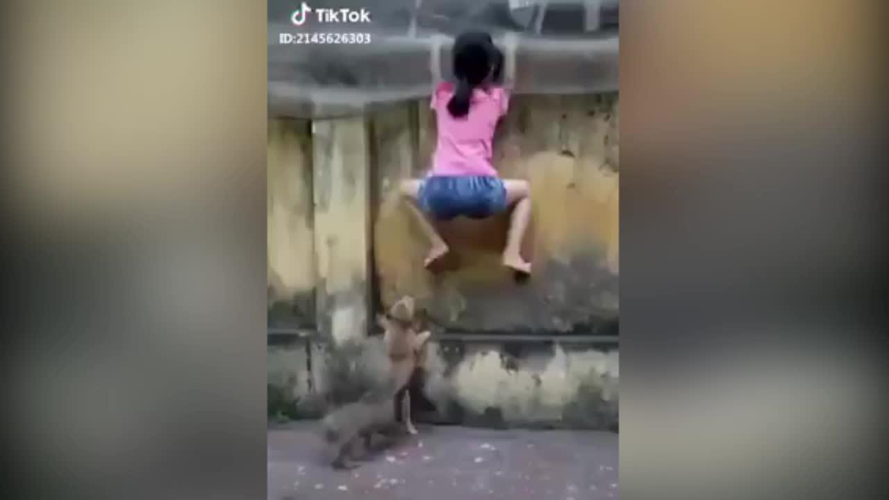 Cô bé khổ sở vì bị hai chú chó 'tấn công'