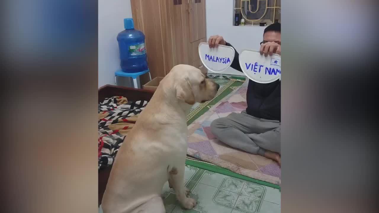 Cún cưng biết chắc nhà vô địch ngay từ đầu