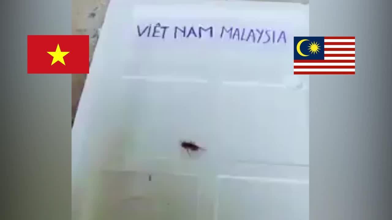 Dế tiên tri bị 'thần kê' xơi tái vì chọn Malaysia vô địch