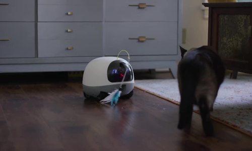 Robot cho phép người dùng 'gọi video' với thú cưng từ xa