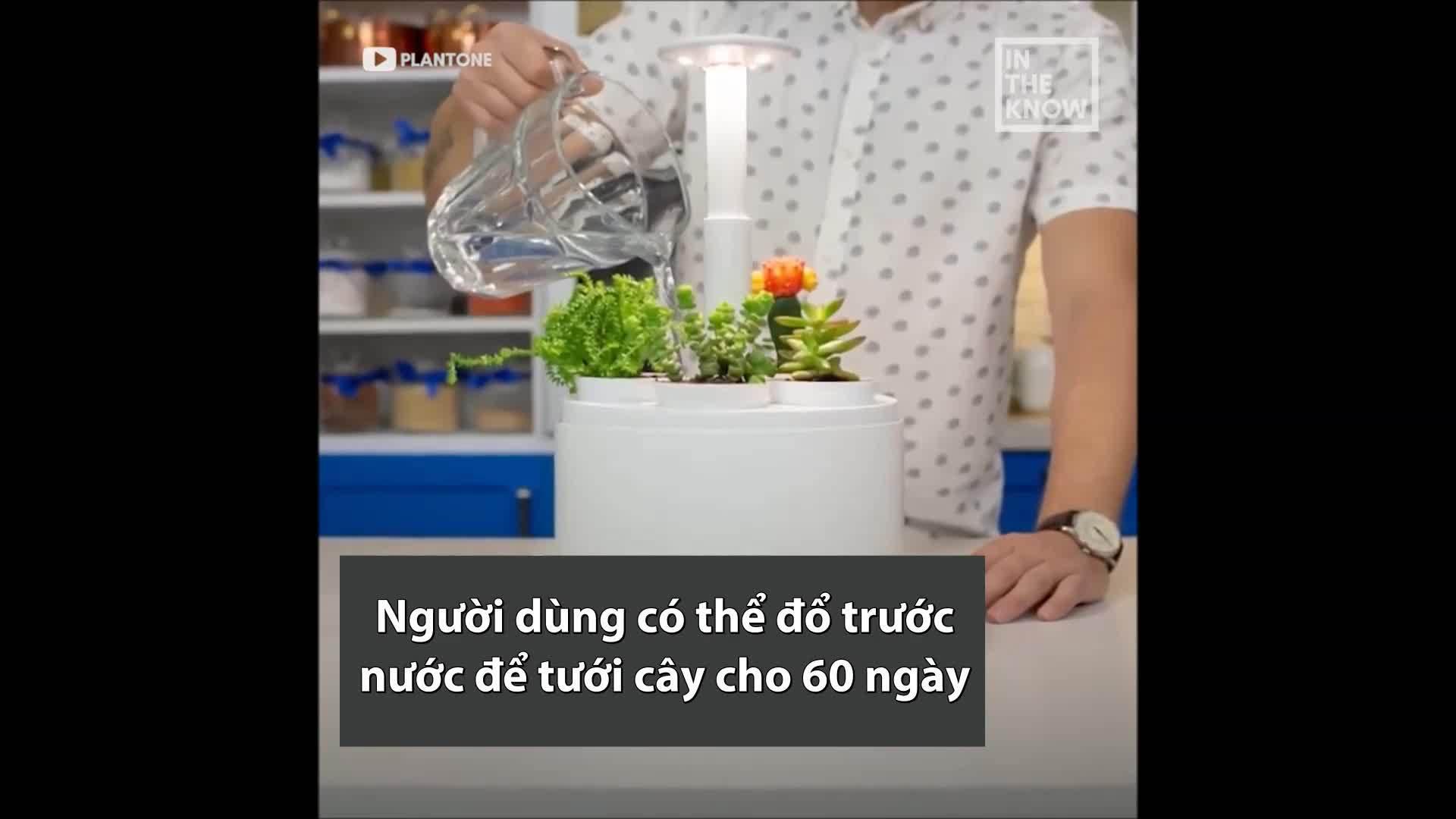 Chậu tự động tưới nước cho cây trong 60 ngày