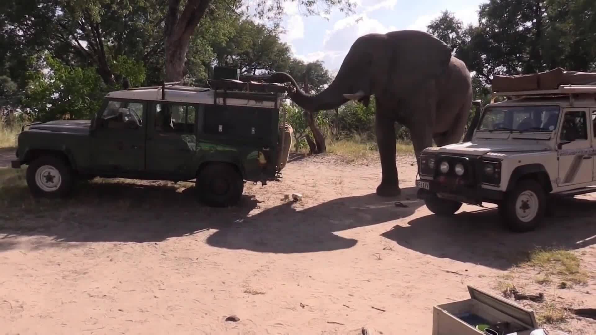 Voi cạy cửa ôtô trộm rau ở khu bảo tồn Botswana