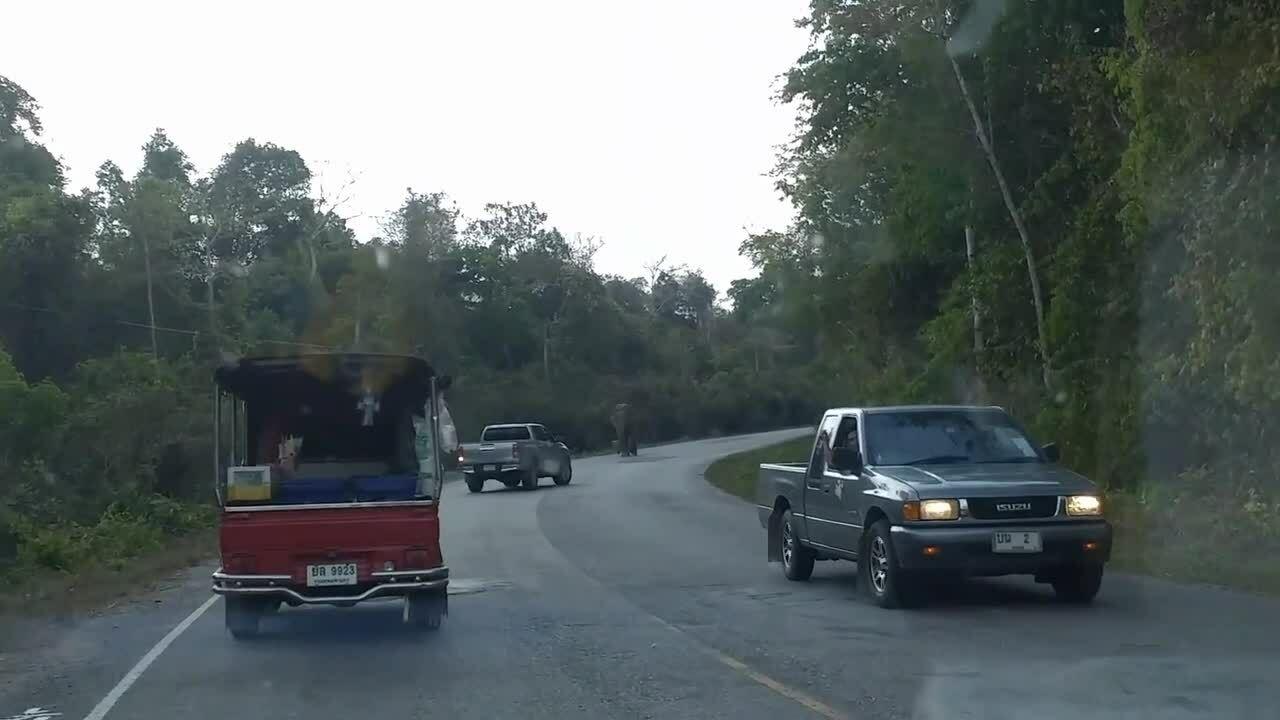 Voi hoang chặn đầu hàng loạt ôtô cướp gạo ở Thái Lan