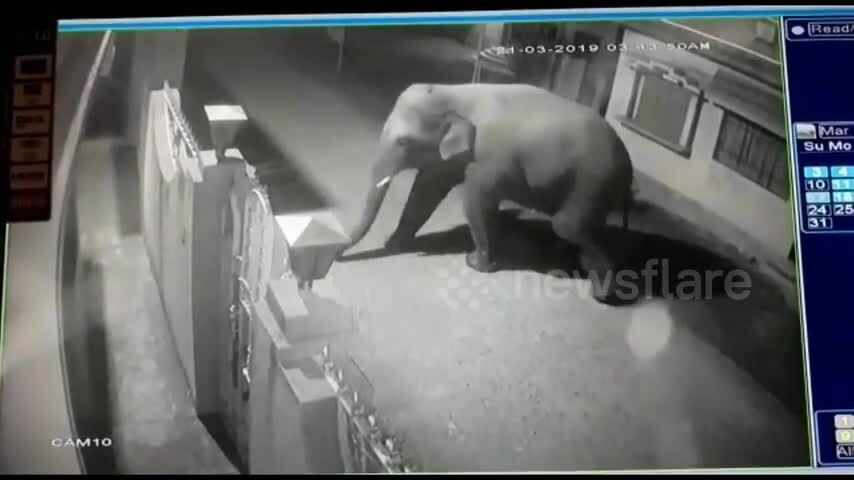 Voi hoang phá tung cổng sắt vào nhà dân trộm thức ăn