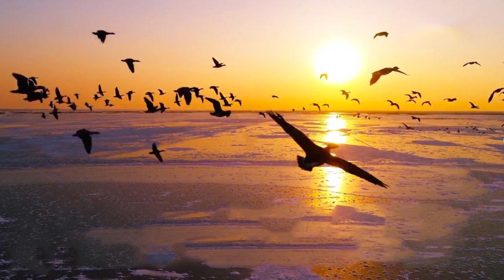 Vùng đất thiên đường cho các loài chim quý hiếm ở Trung Quốc