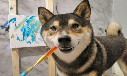 Chó vẽ tranh trừu tượng giúp chủ kiếm hàng nghìn USD