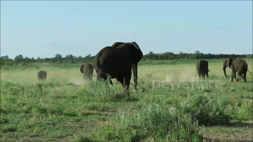 Ngựa vằn đứng uống nước vội bỏ chạy khi gặp voi