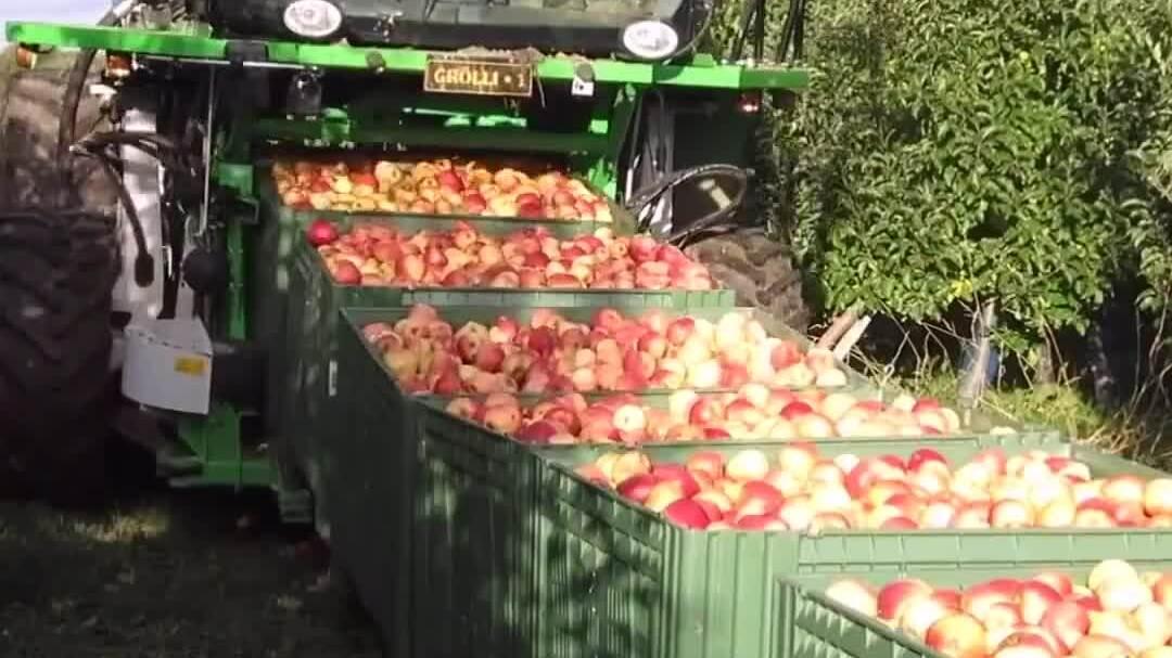 Cỗ máy vận chuyển trái cây trên trang trại của Đức