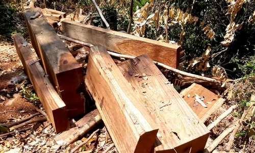 Rừng tự nhiên ở Quảng Nam bị đốn hạ