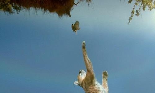 Linh miêu nhảy cao 3,5 mét để vồ chim thợ dệt