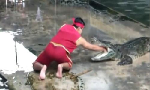 Thanh niên diễn xiếc cùng cá sấu hốt hoảng khi bạn ngã