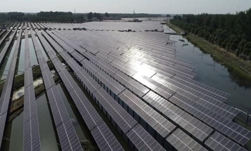 Trung Quốc nuôi tôm hùm đất dưới tấm pin mặt trời