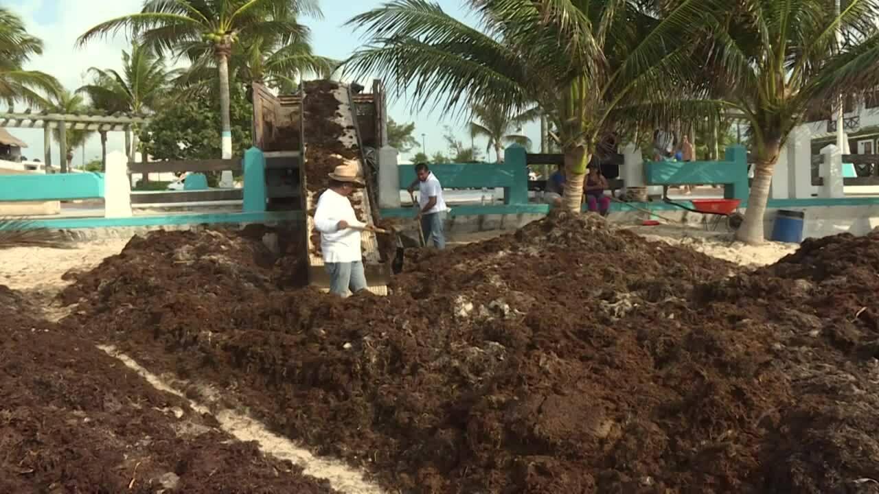 Những doanh nghiệp Mexico sản xuất gạch và giấy từ tảo biển