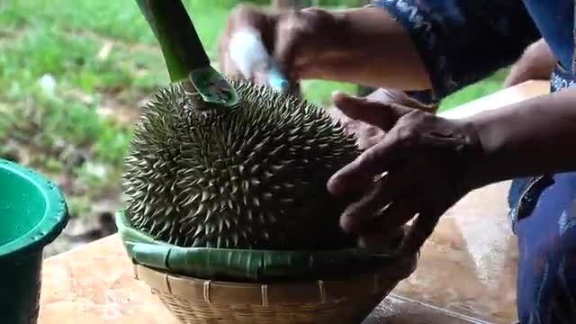 Trang trại Thái Lan trồng sầu riêng giá 30.000 USD một quả