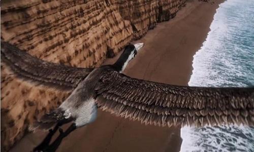 Quái vật chim cổ đại có sải cánh dài ngang phi cơ
