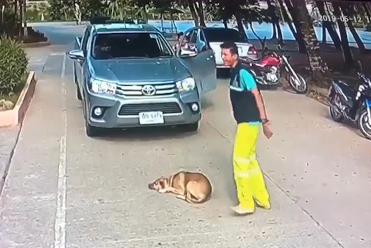 Chó cản đường ôtô, nằm 'ăn vạ'